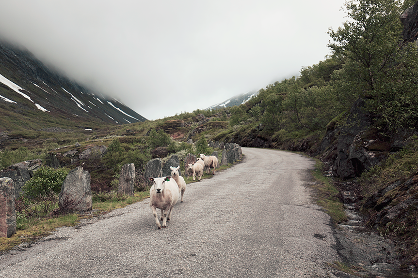 Travel Throwback Thursday - Stryn, Geiranger & Lom 2017