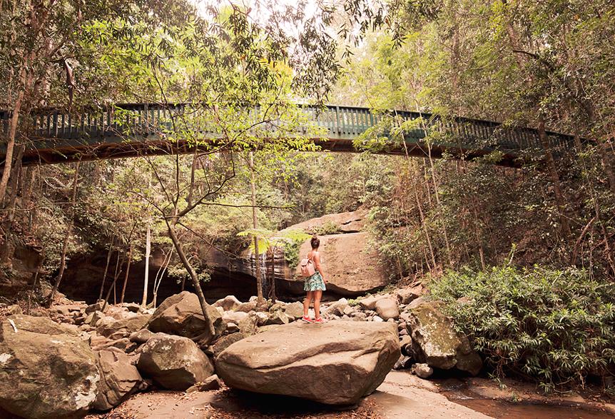 Travel Throwback Thursday: Buderim Forest Park