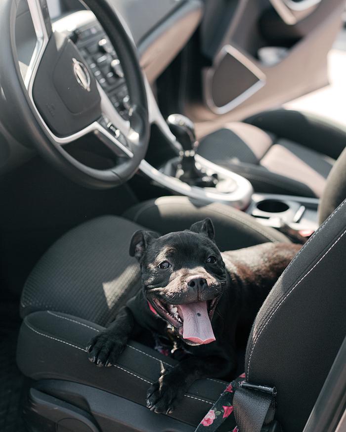 Allt du behöver veta om att resa inrikes med hund