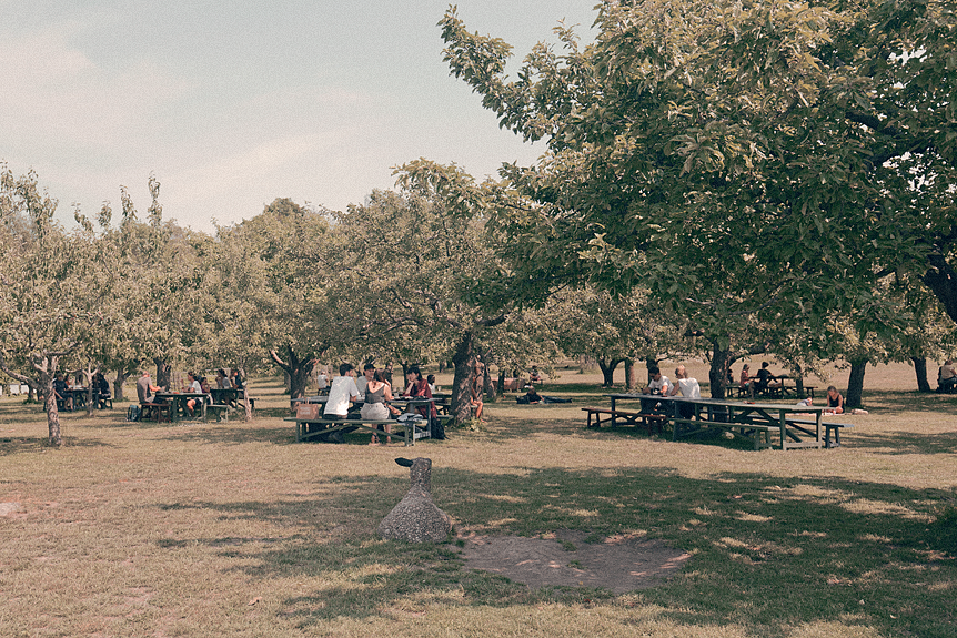 14 mysiga platser att ha picknick på i Stockholm