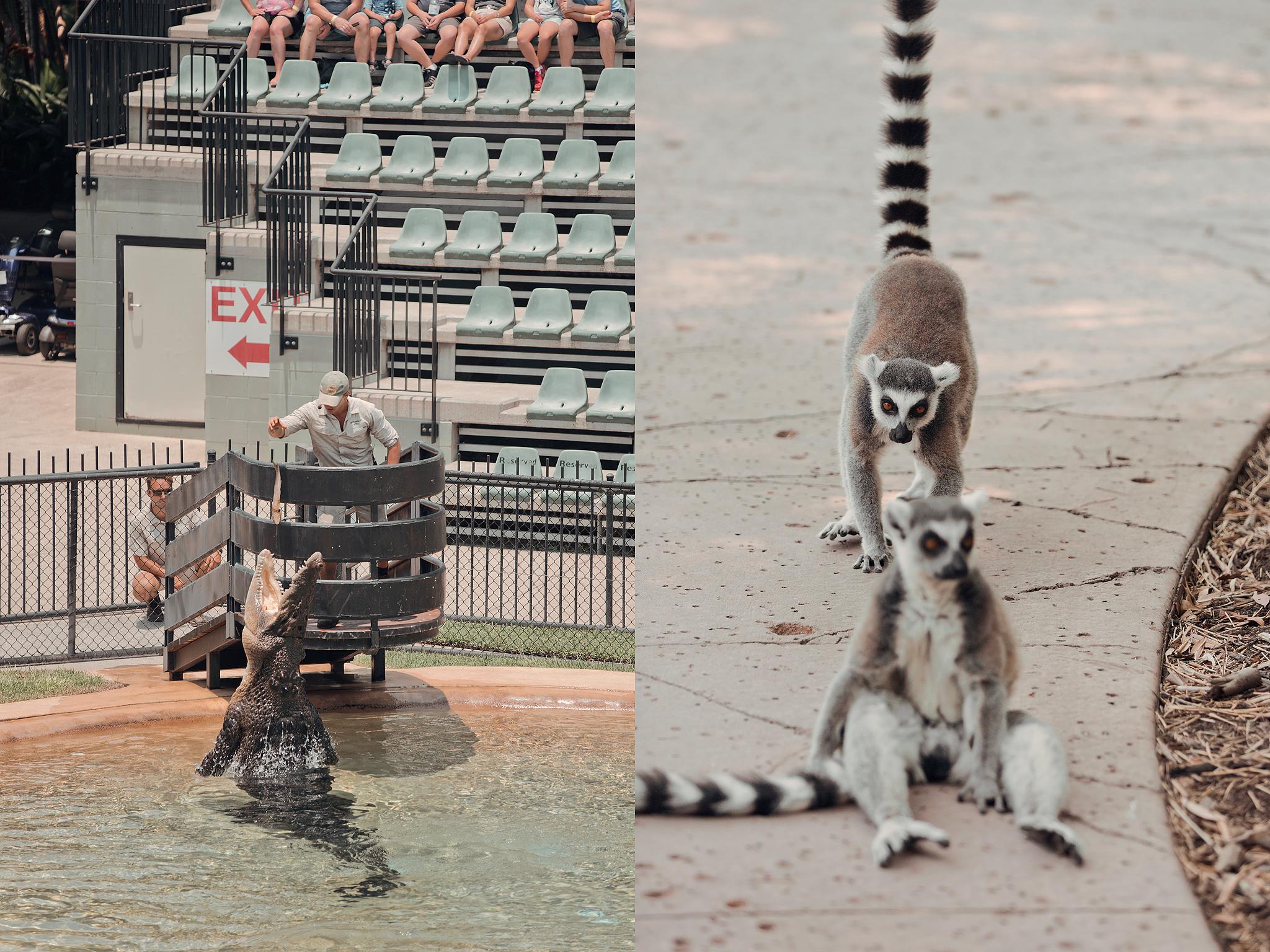 Resedagbok Sunshine Coast: Australia Zoo