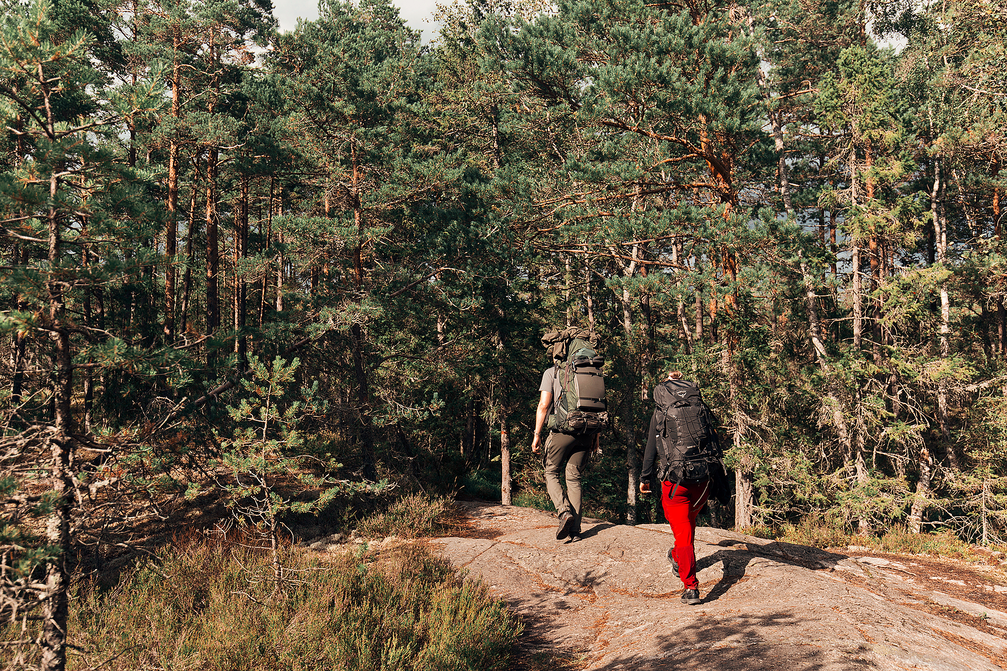 Vandring i Tyresta Nationalpark