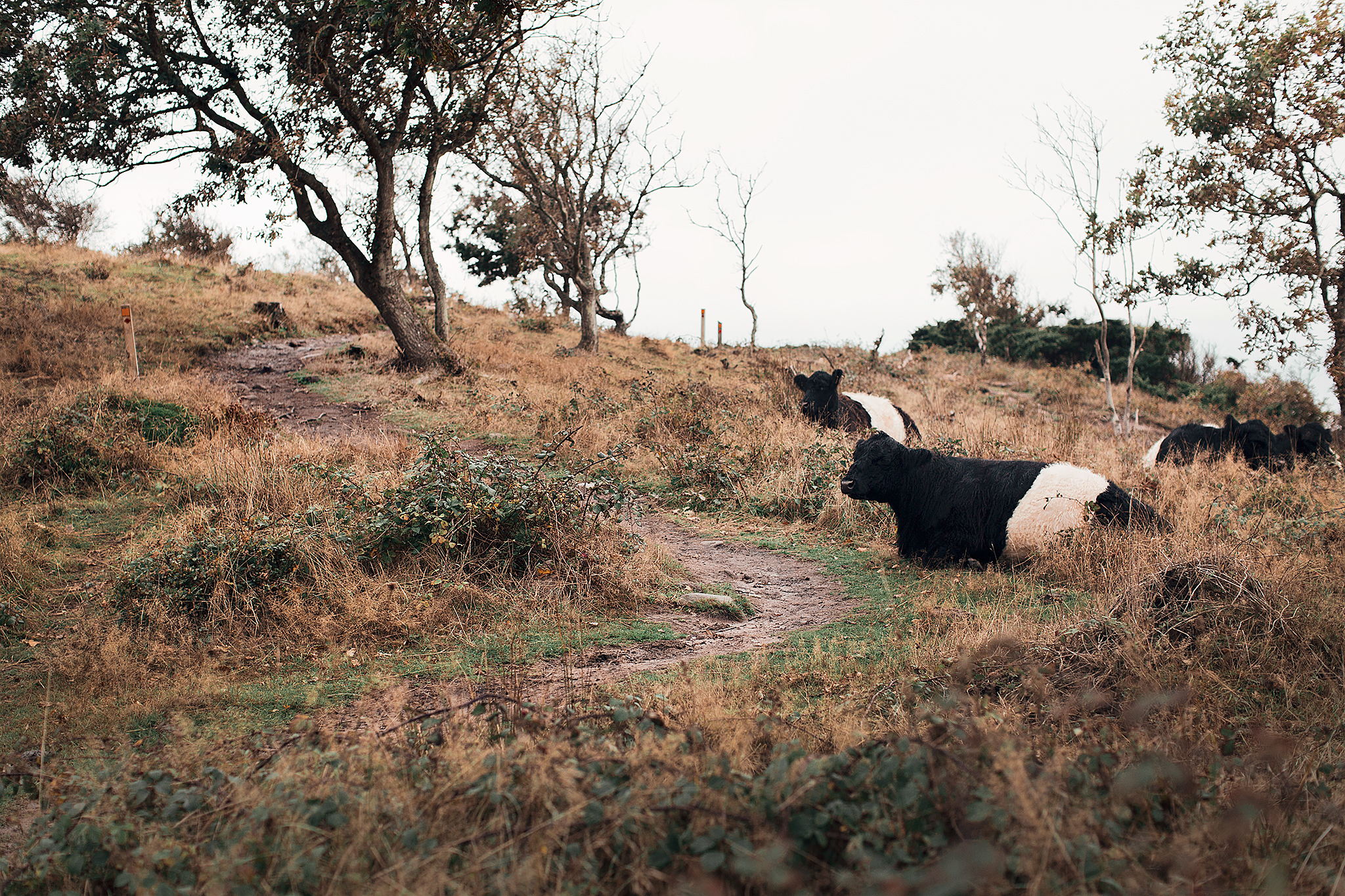 Naturnära äventyr på Kullahalvön